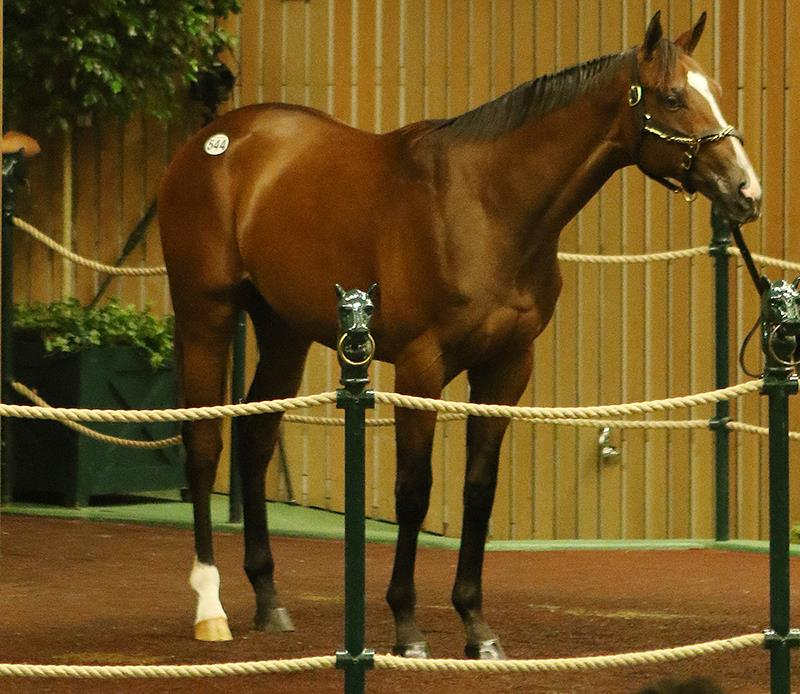 Will Take Charge Colt Lights Board Wednesday At Keeneland