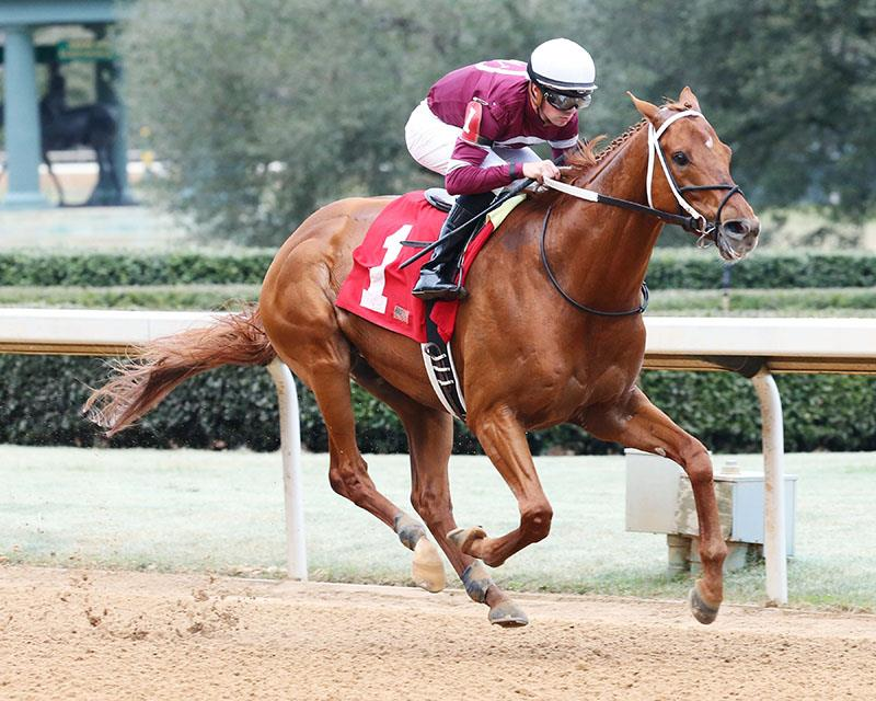 Gun Runner is in hand in his easy 2017 Razorback H. (G3) win - Coady photo