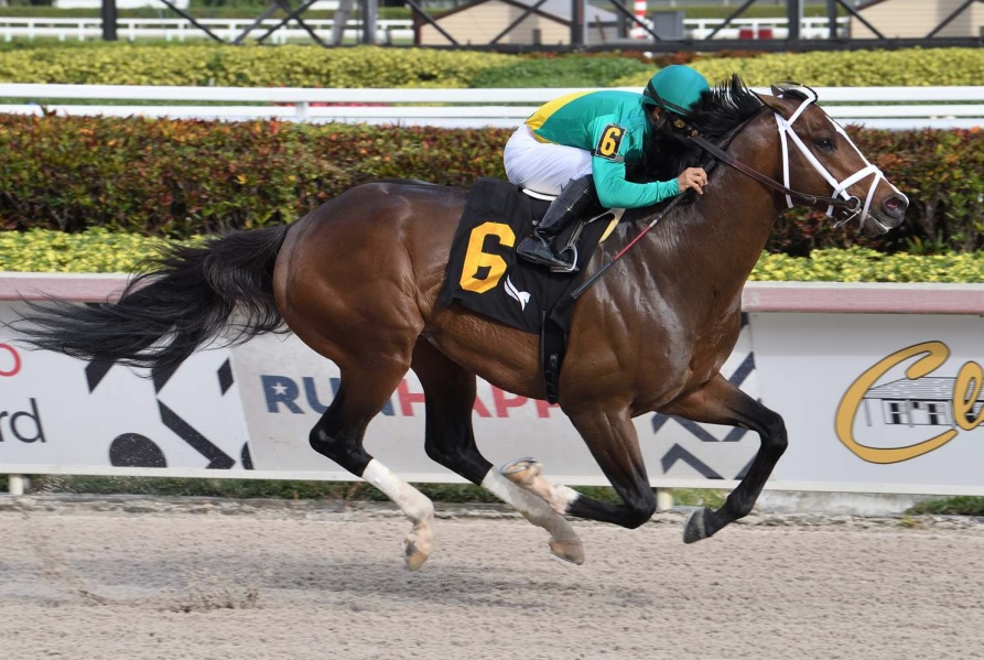 Palace Malice runners shining at Gulfstream's Championship meet